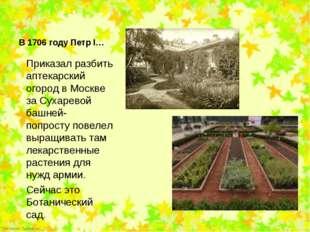 Приказал разбить аптекарский огород в Москве за Сухаревой башней- попросту по
