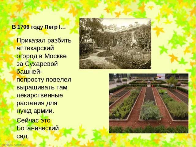 Приказал разбить аптекарский огород в Москве за Сухаревой башней- попросту по...