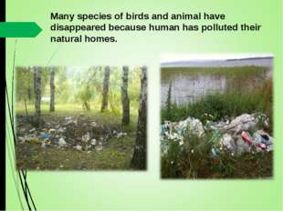 Many species of birds and animal have disappeared because human has polluted