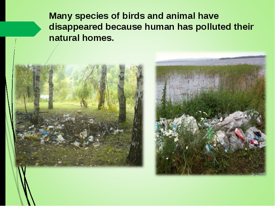 Many species of birds and animal have disappeared because human has polluted...