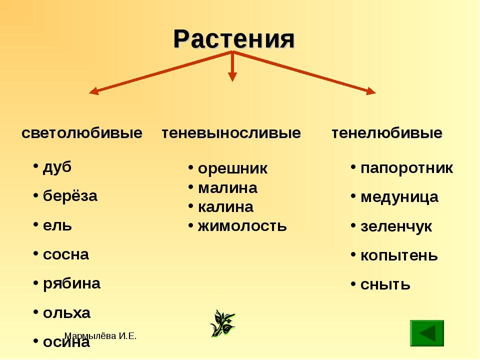 Мармылёва И.Е. Растения светолюбивые теневыносливые тенелюбивые орешник малин...