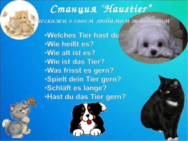 """Станция """"Haustier"""" Расскажи о своем любимом животном"""