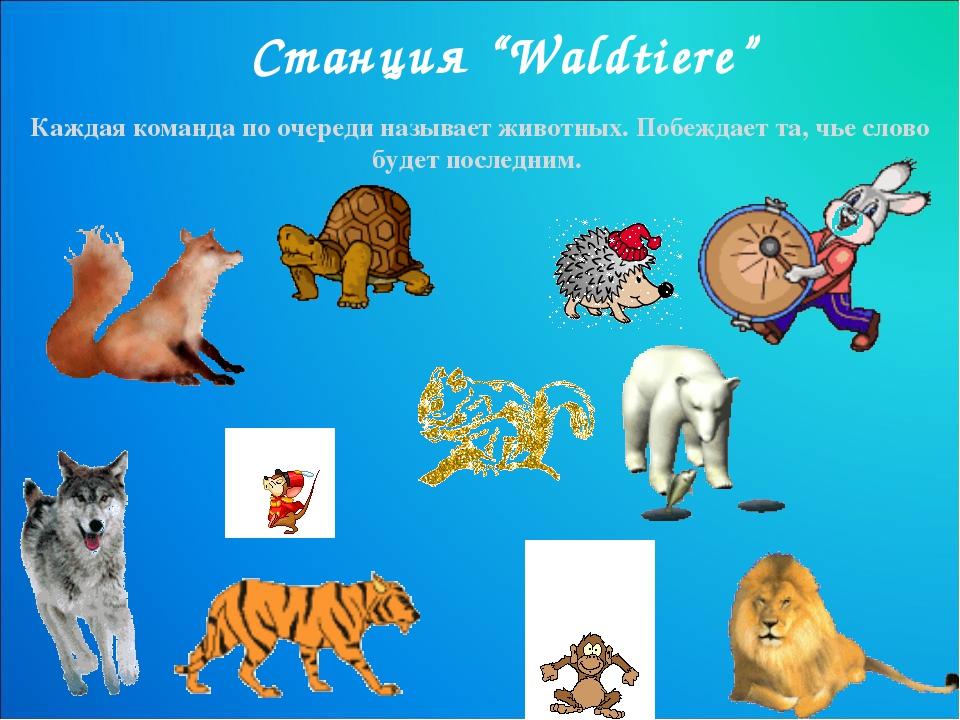"""Станция """"Waldtiere"""" Каждая команда по очереди называет животных. Побеждает та..."""