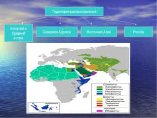 Территория распространения Ближний и Средний восток Северная Африка Восточная
