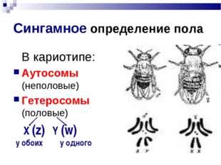 Сингамное определение пола В кариотипе: Аутосомы (неполовые) Гетеросомы (пол