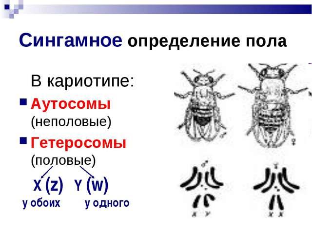 Сингамное определение пола В кариотипе: Аутосомы (неполовые) Гетеросомы (пол...