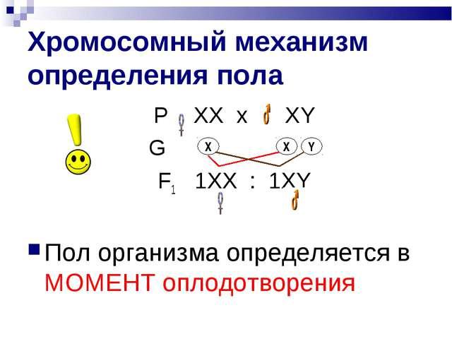 Хромосомный механизм определения пола Р ХХ х ХY  G F1 1XX : 1ХY Пол орга...
