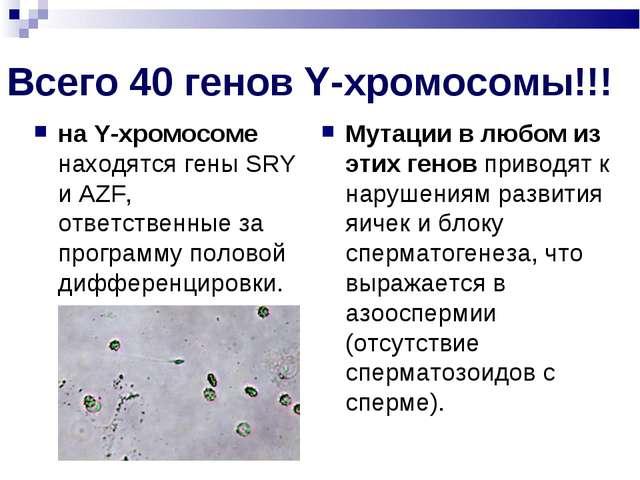 Всего 40 генов Y-хромосомы!!! на Y-хромосоме находятся гены SRY и AZF, ответс...