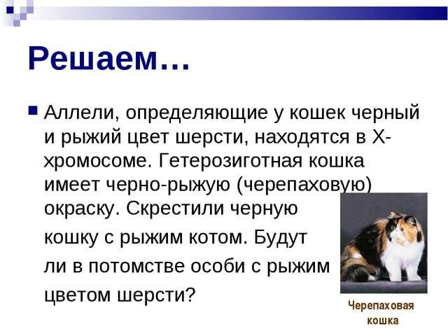 Решаем… Аллели, определяющие у кошек черный и рыжий цвет шерсти, находятся в...
