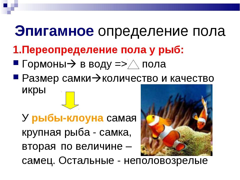 Эпигамное определение пола 1.Переопределение пола у рыб: Гормоны в воду => п...