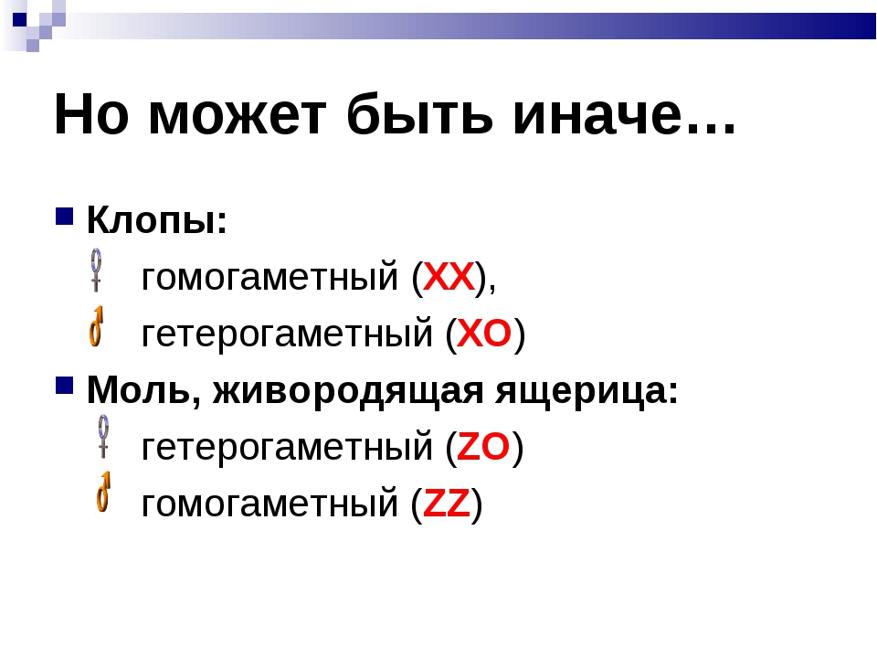 Но может быть иначе… Клопы: гомогаметный (ХХ), гетерогаметный (ХО) Моль,...