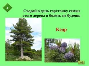 Съедай в день горсточку семян этого дерева и болеть не будешь