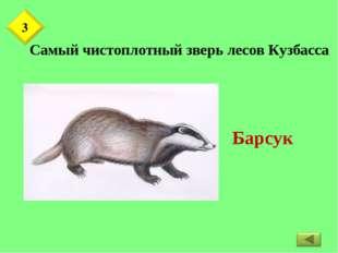 Самый чистоплотный зверь лесов Кузбасса