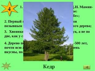 4 Великий русский писатель Д.Н. Мамин-Сибиряк писал об этом дереве: «Будто бо