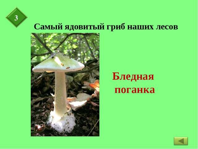 Самый ядовитый гриб наших лесов