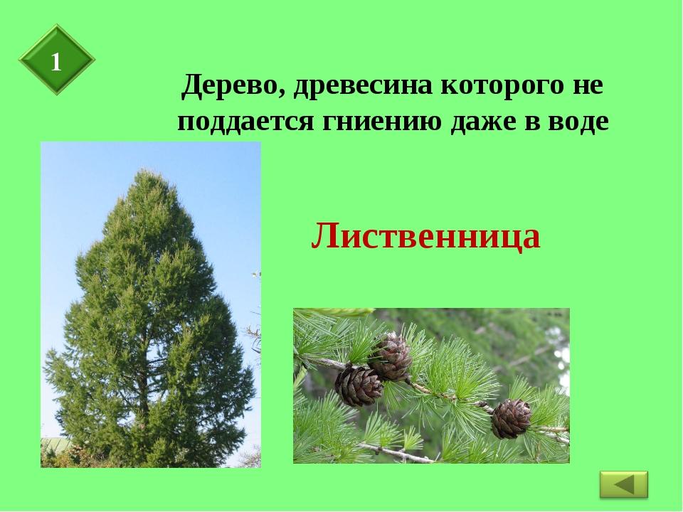 Дерево, древесина которого не поддается гниению даже в воде