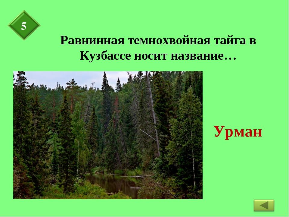 Равнинная темнохвойная тайга в Кузбассе носит название…
