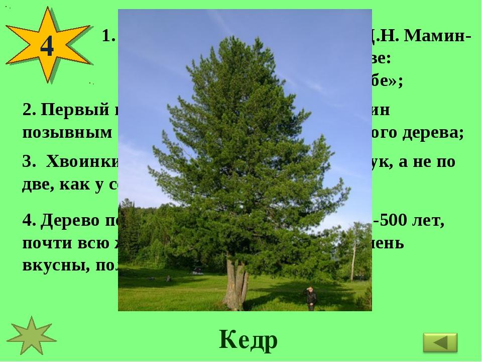 4 Великий русский писатель Д.Н. Мамин-Сибиряк писал об этом дереве: «Будто бо...