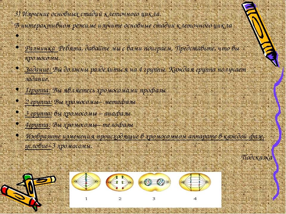 3) Изучение основных стадий клеточного цикла. В интерактивном режиме изучите...