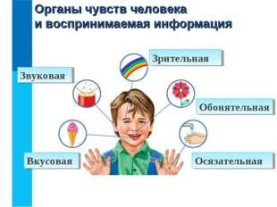 Органы чувств человека и воспринимаемая информация Зрительная Звуковая Вкусов