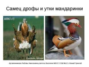 Самец дрофы и утки мандаринки Артамонникова Любовь Николаевна,учитель биологи