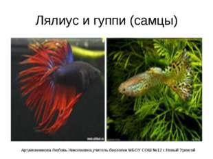 Лялиус и гуппи (самцы) Артамонникова Любовь Николаевна,учитель биологии МБОУ