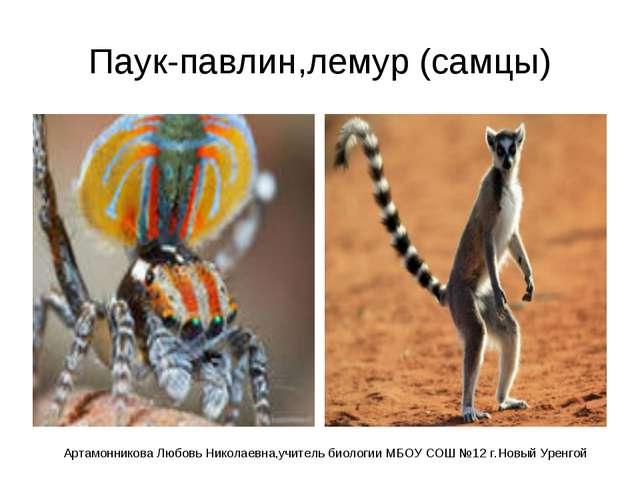 Паук-павлин,лемур (самцы) Артамонникова Любовь Николаевна,учитель биологии МБ...