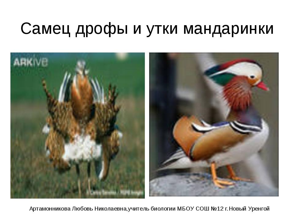 Самец дрофы и утки мандаринки Артамонникова Любовь Николаевна,учитель биологи...