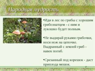 Народная мудрость * Иди в лес по грибы с хорошим грибознатцем - с ним и лукош