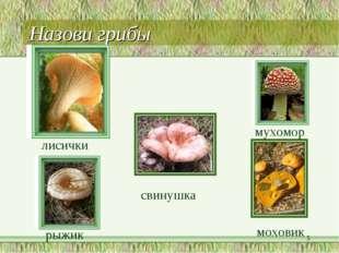 Назови грибы лисички мухомор рыжик * моховик свинушка