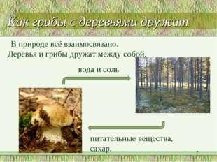 В природе всё взаимосвязано. Деревья и грибы дружат между собой. питательные