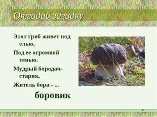 Отгадай загадку Этот гриб живет под елью, Под ее огромной тенью. Мудрый бород
