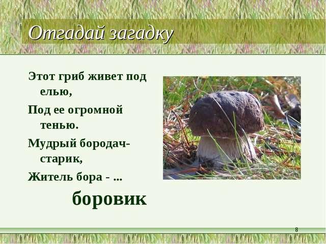 Отгадай загадку Этот гриб живет под елью, Под ее огромной тенью. Мудрый бород...