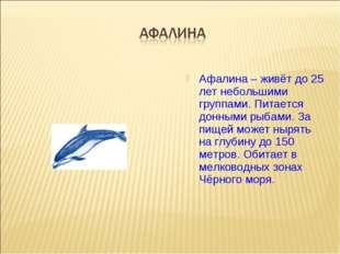Афалина – живёт до 25 лет небольшими группами. Питается донными рыбами. За пи