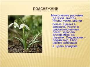 Многолетнее растение до 30см. высоты Листья узкие, цветки белые. Цветет в фе