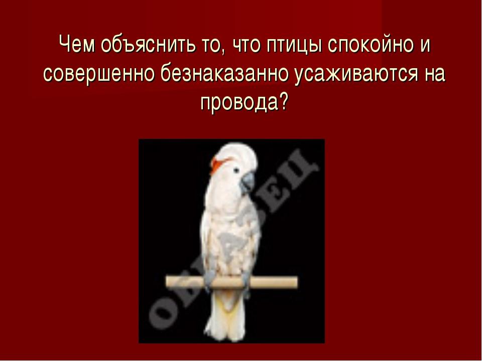 Чем объяснить то, что птицы спокойно и совершенно безнаказанно усаживаются на...
