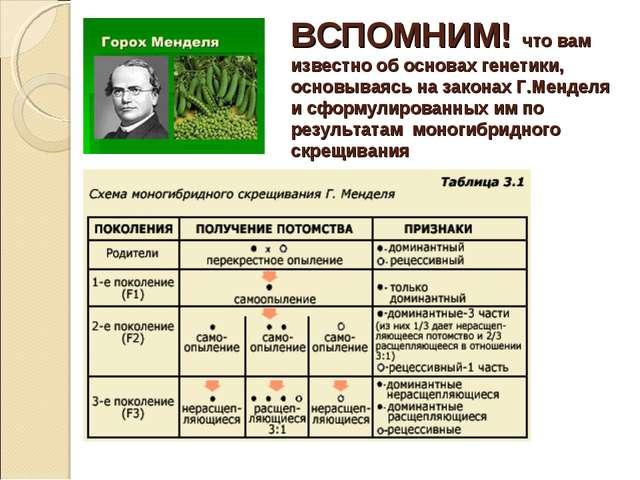 ВСПОМНИМ! что вам известно об основах генетики, основываясь на законах Г.Менд...