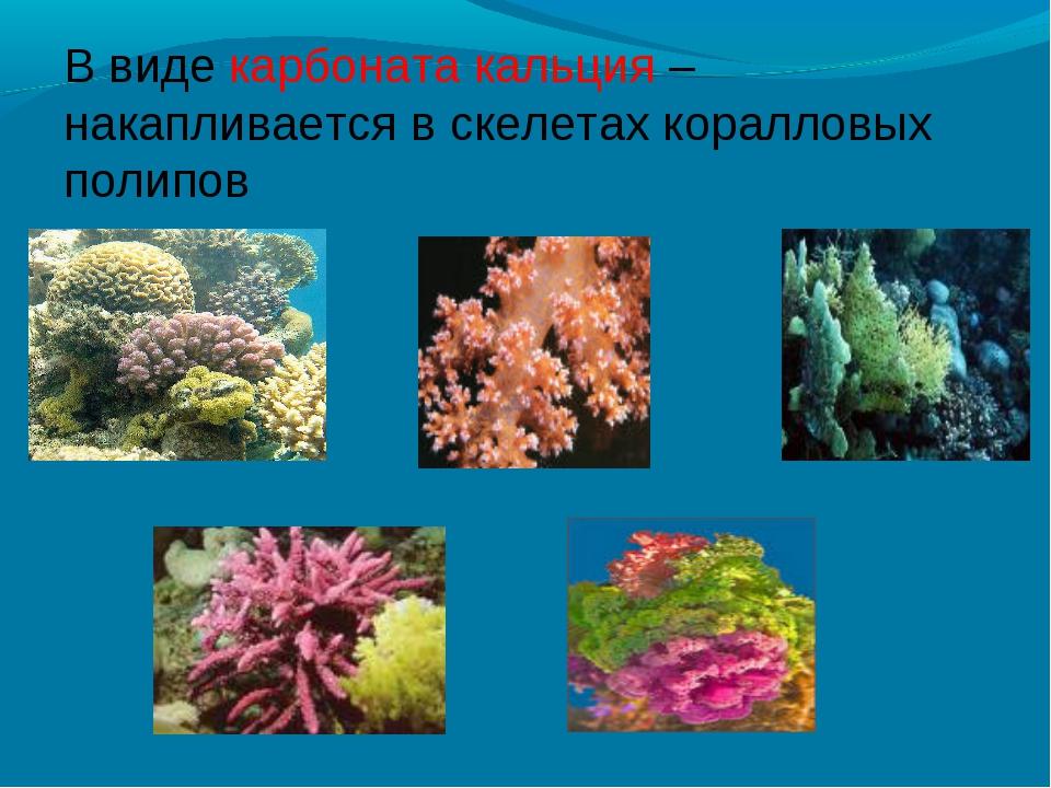 В виде карбоната кальция – накапливается в скелетах коралловых полипов