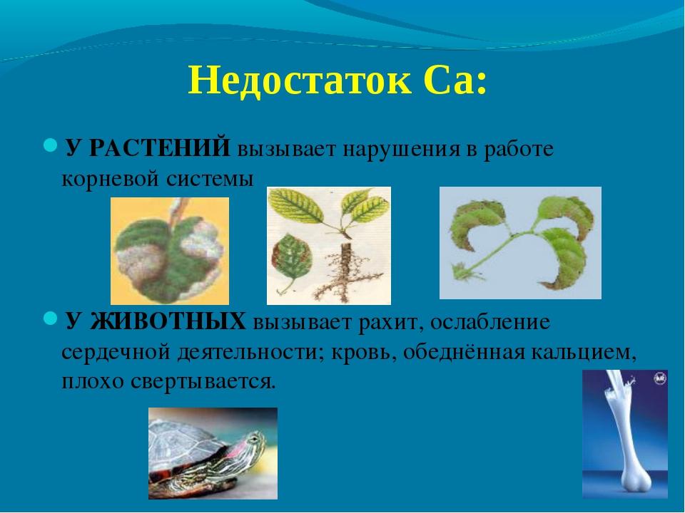 Недостаток Ca: У РАСТЕНИЙ вызывает нарушения в работе корневой системы У ЖИВО...