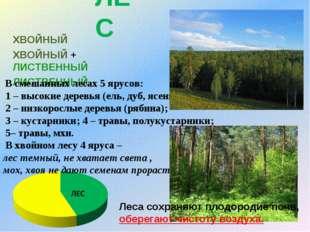 ЛЕС ХВОЙНЫЙ ХВОЙНЫЙ + ЛИСТВЕННЫЙ ЛИСТВЕННЫЙ В смешанных лесах 5 ярусов: 1 – в