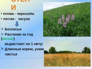 СТЕПИ почва - чернозём летом - засуха Безлесье Растения за год (весна!) вырас