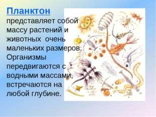 Планктон представляет собой массу растений и животных очень маленьких размеро
