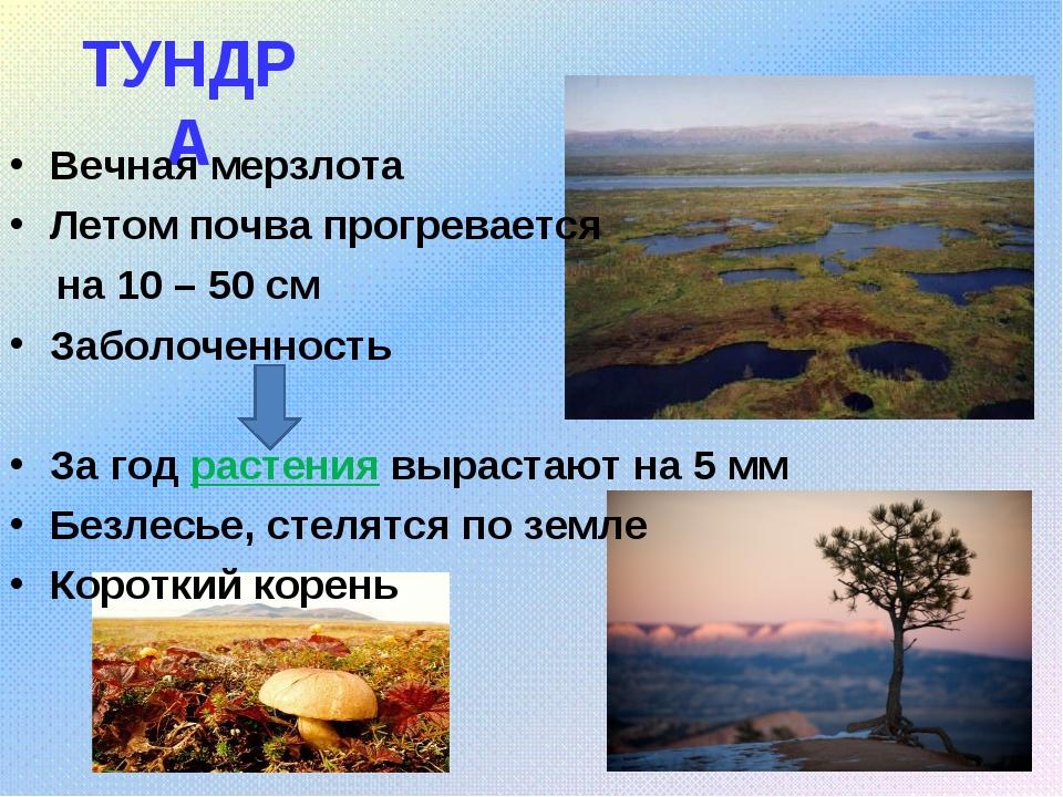ТУНДРА Вечная мерзлота Летом почва прогревается на 10 – 50 см Заболоченность...