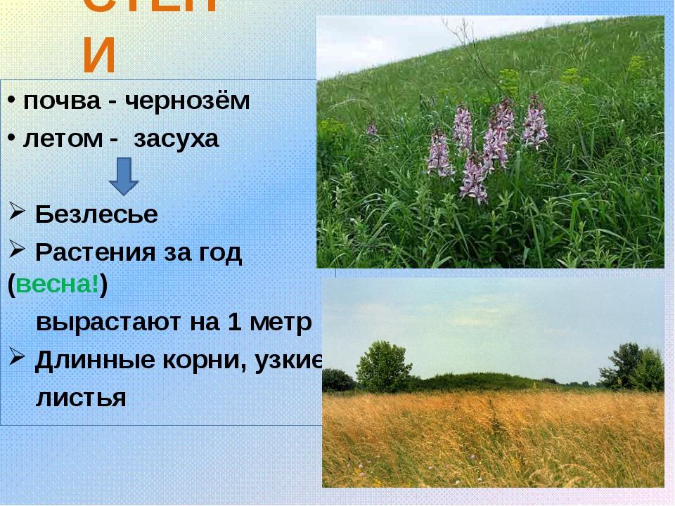 СТЕПИ почва - чернозём летом - засуха Безлесье Растения за год (весна!) вырас...
