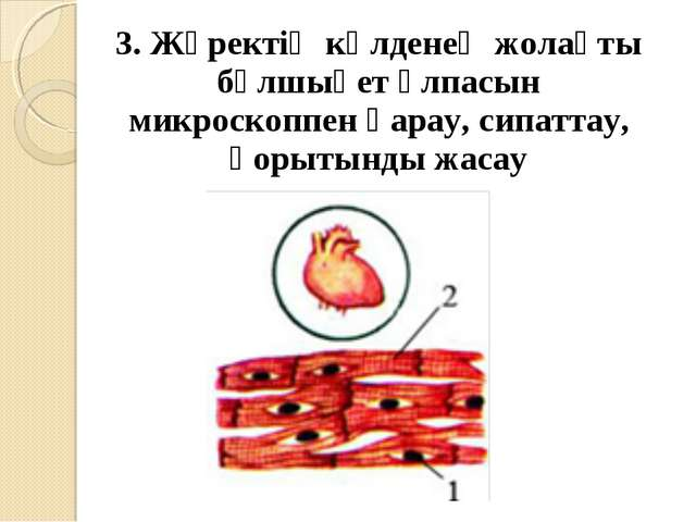 3. Жүректің көлденең жолақты бұлшықет ұлпасын микроскоппен қарау, сипаттау, қ...