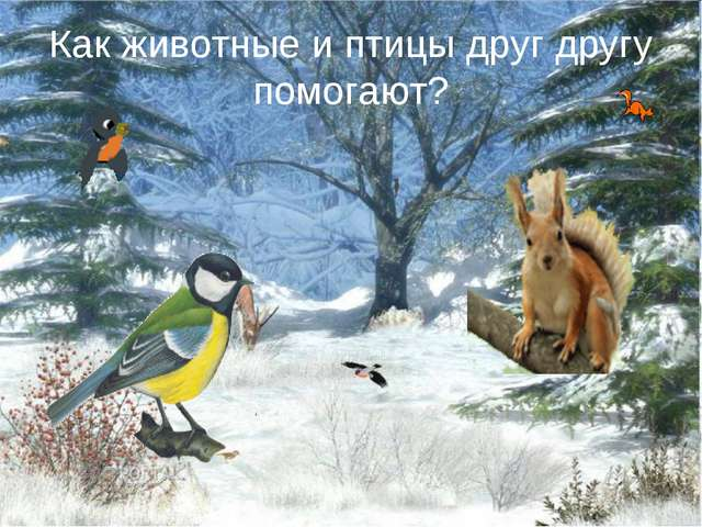 Как животные и птицы друг другу помогают?