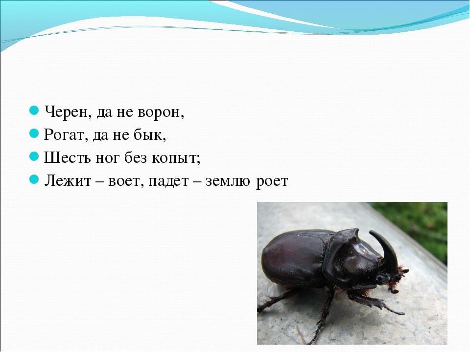 Черен, да не ворон, Рогат, да не бык, Шесть ног без копыт; Лежит – воет, паде...