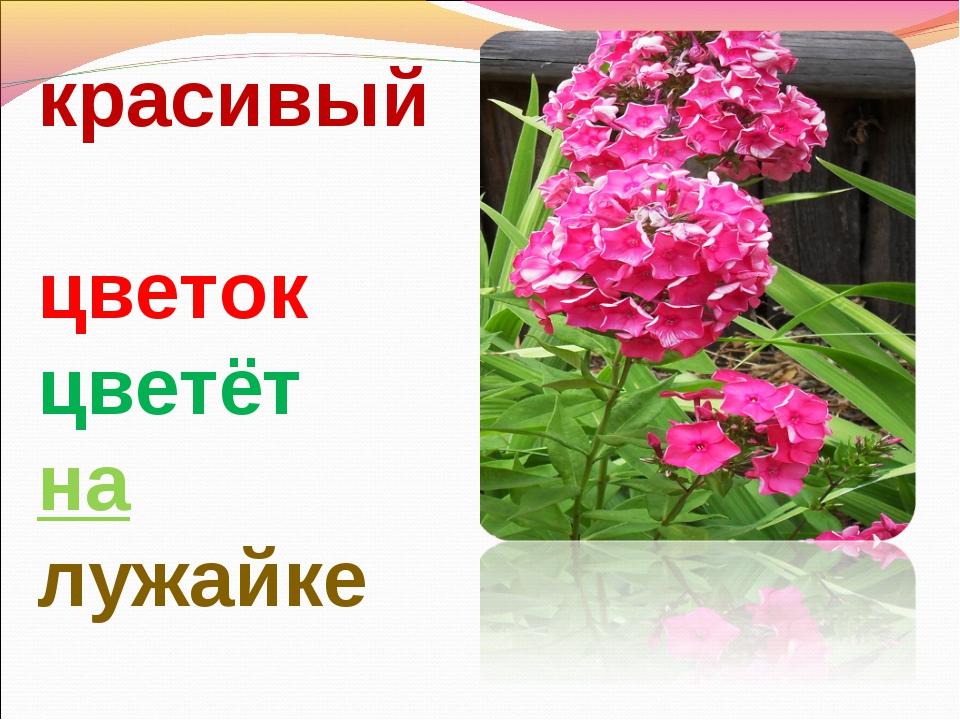 красивый цветок цветёт на лужайке