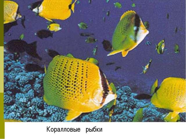 Коралловые рыбки