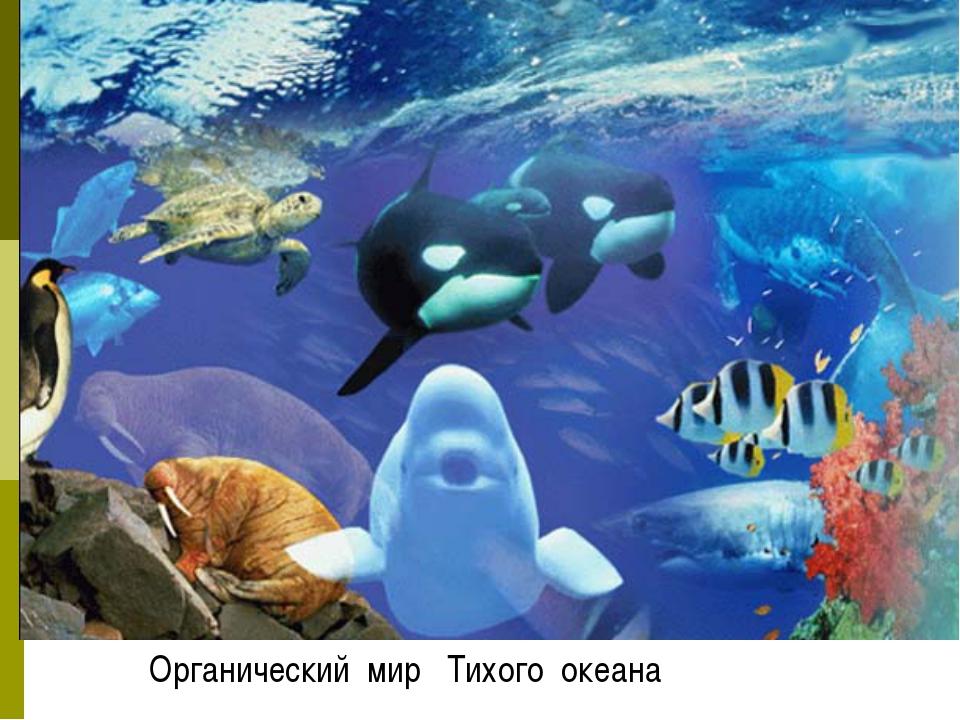 Органический мир Тихого океана